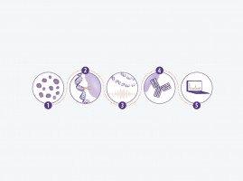 ChIP-IT® Control, Primer,  qPCR Kits