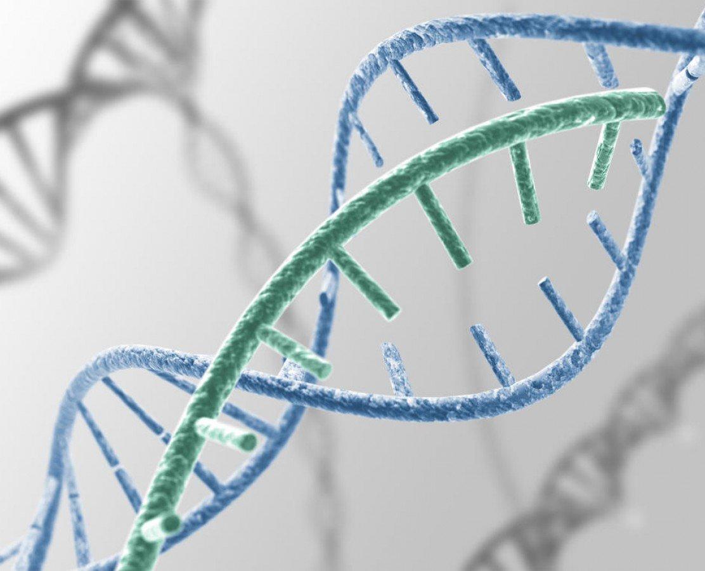 Epigenetik Nedir ?