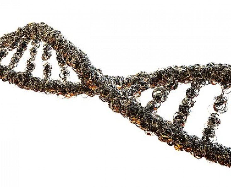 DNA Metilasyonu ve MSP PCR Standardizasyonu